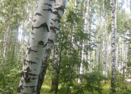 otdyh-na-prirode-dlja-menja-eto-zvuki-i-zapahi-lesa-bc2ee02