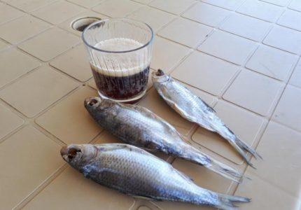 rybalka-pod-astrahanju-na-majskie-sumasshedshij-ulov-i-otdyh-s-detmi-b64a58a