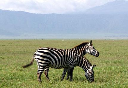 v-afriku-na-safari-slony-lvy-zhirafy-iz-okna-mashiny-otdyh-v-afrike-42926fd